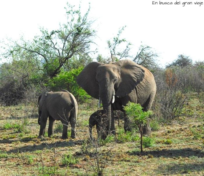 Una familia de elefantes con la mamá, un adolescente y un bebe