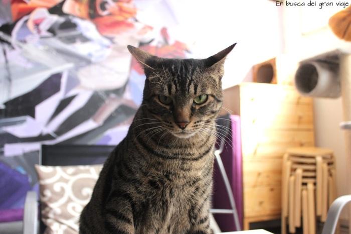 Una de las gatas de la casa de los gatos