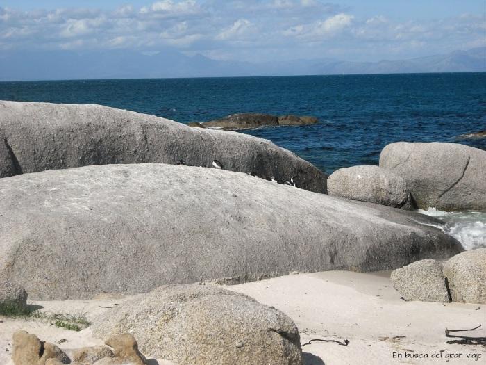 Varios pingüinos descansando sobre una roca