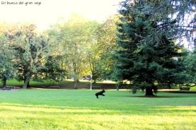 Un perro corriendo libremente en el parque de Doña Casilda