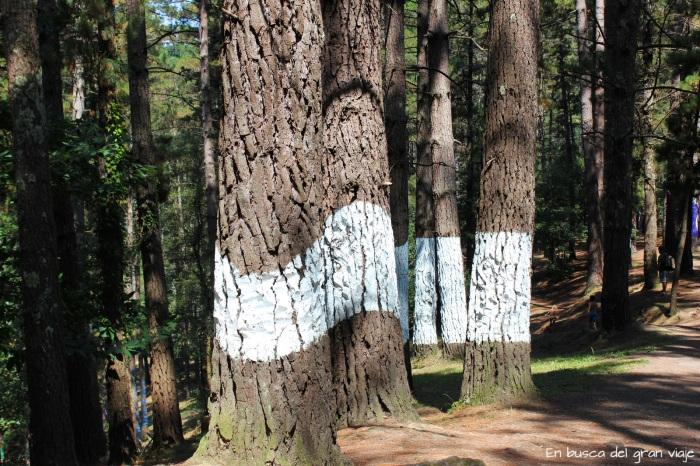 Árboles pintados en el Bosque pintado de Om