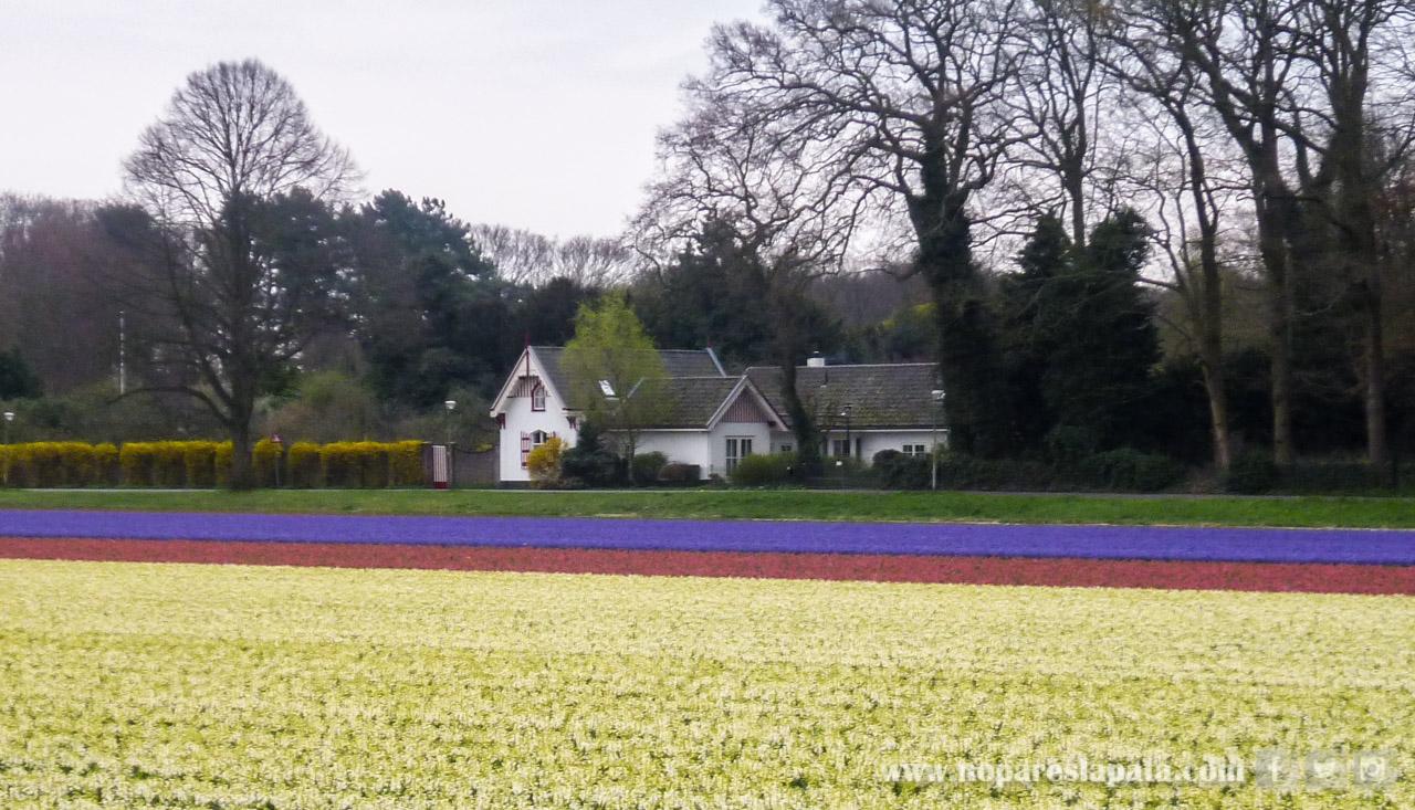 05- Holanda