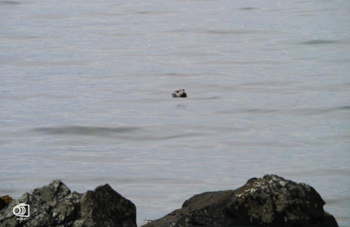 islandia-focas.jpg