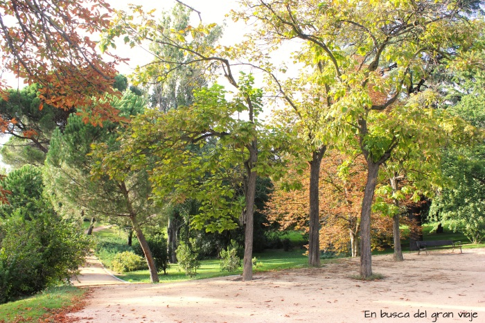 Camino del parque rodeado por árboles y hojas por el suelo de color naranja