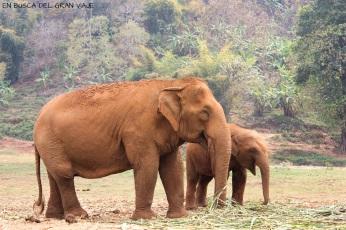 Mamá y bebé elefante en el Elephant Nature Park
