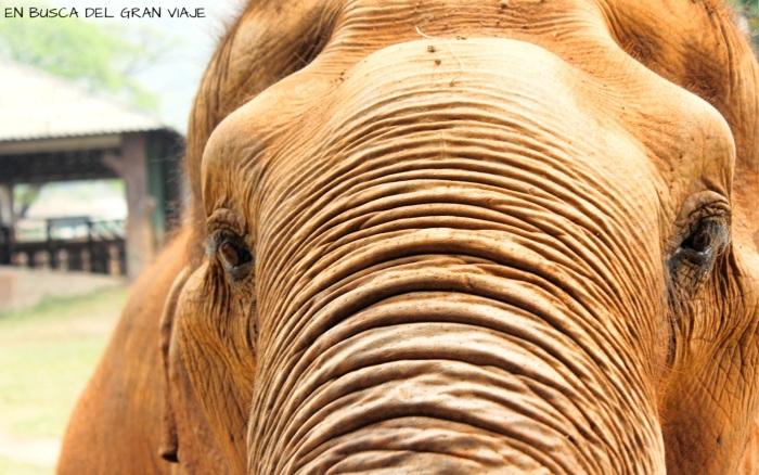 El rostro de uno de los elefantes del ele