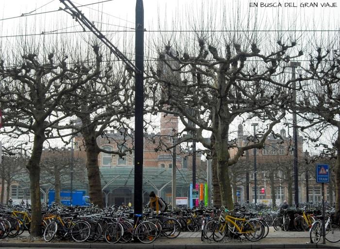 Cientos de bicis aparcadas en la estación de tren.